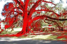 Scarlet tree